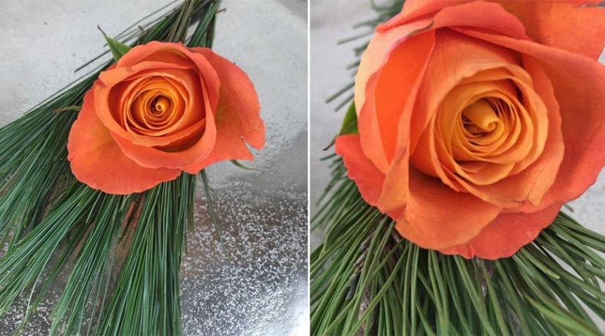 rose-coll6.jpg