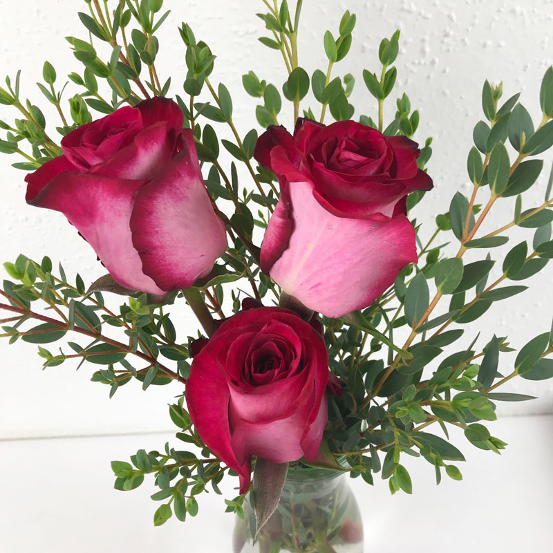 rose-natur1.jpg