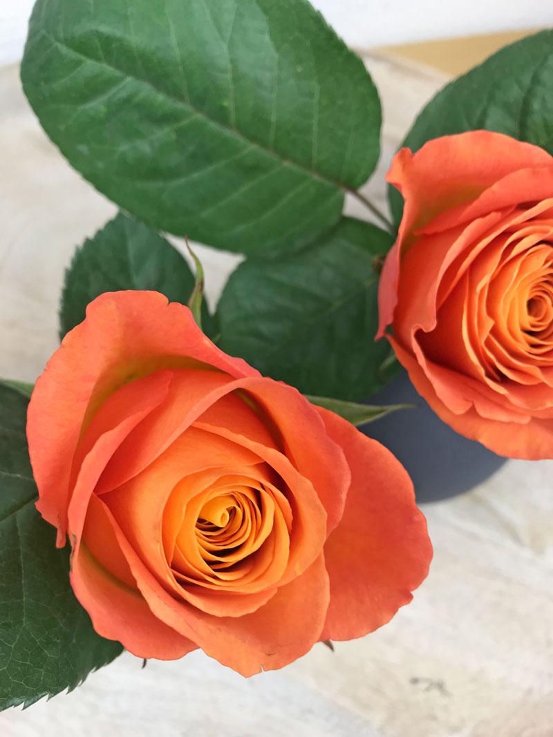 rose100