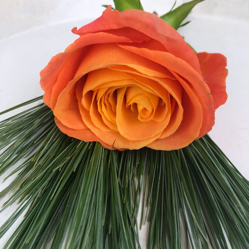 rose56.jpg