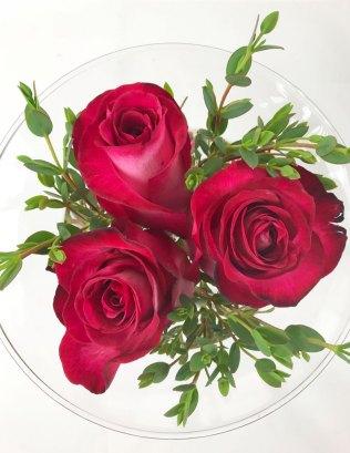 rosen11