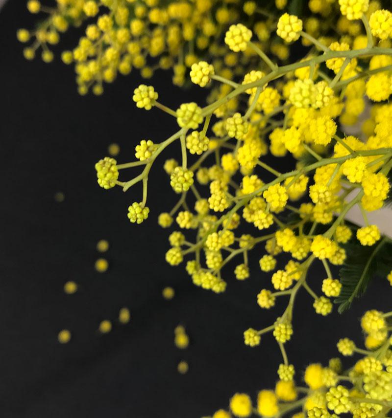 gelb5.jpg