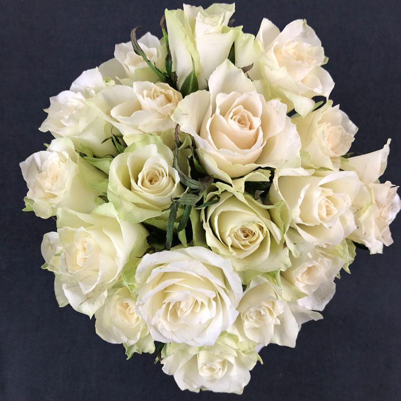 rosen201.jpg