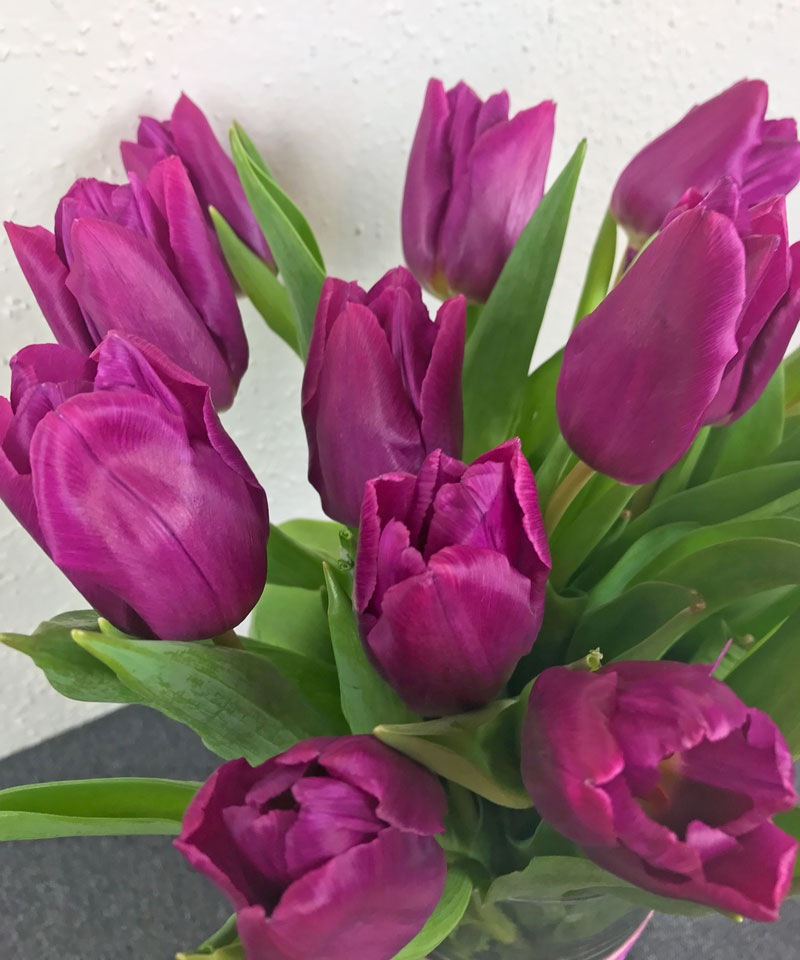 tulpen42.jpg