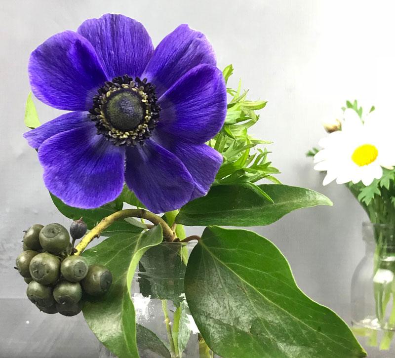 anemone-blau60.jpg