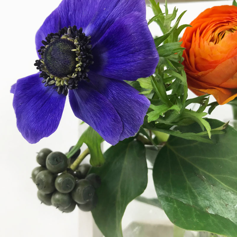 blaue-anemone112.jpg