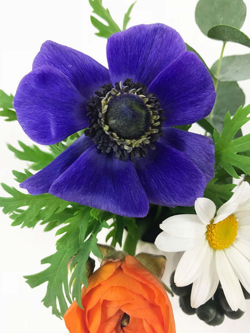 blaue-anemone707.jpg