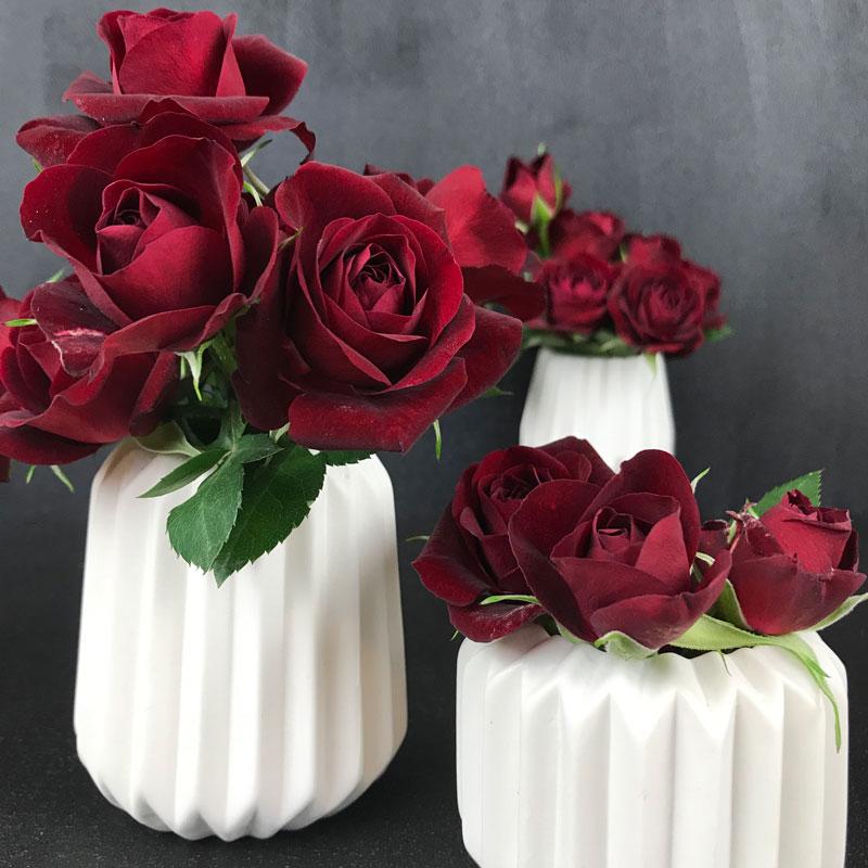 rose-rot28.jpg