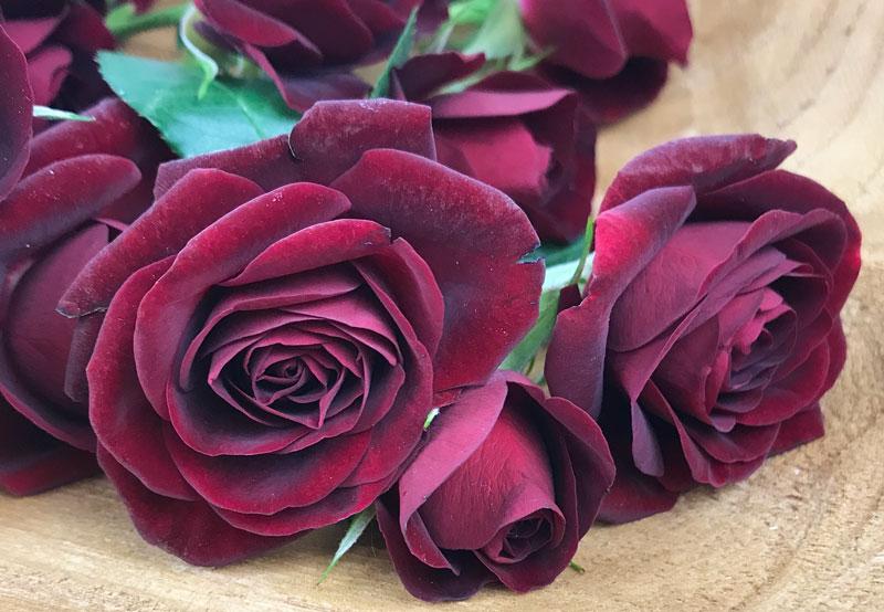 rot-rose10.jpg