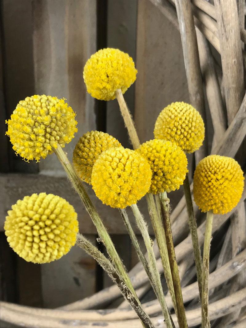 gelb200.jpg