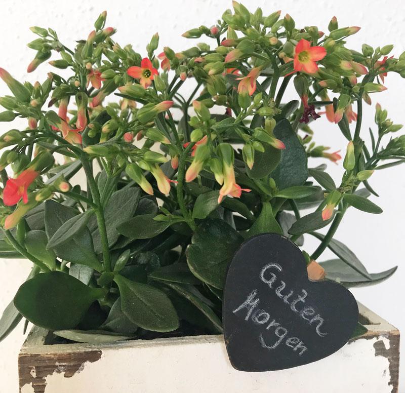 GM-Blumen.jpg