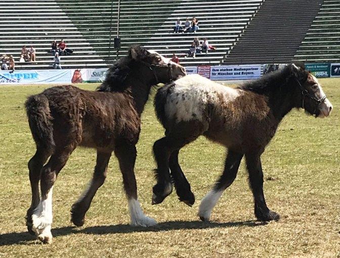 pferd13.jpg