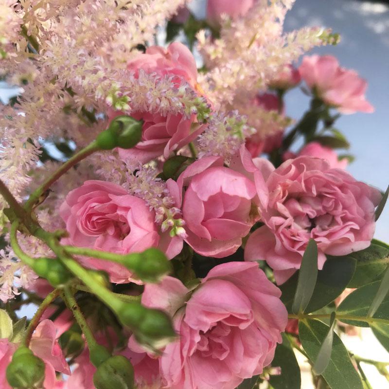 rosa12.jpg