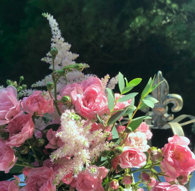 rosa6.jpg