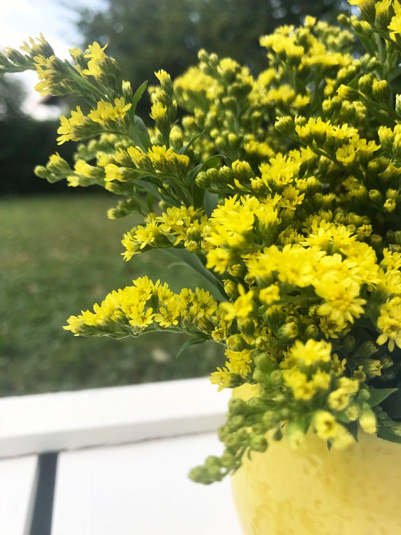 gelb4.jpg