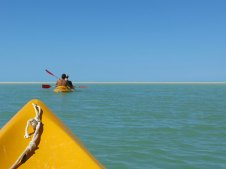 aus der mangrove ins meer