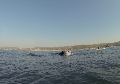 Wale – kommen auf Bildern nicht rüber ...