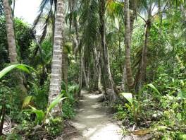 Der Weg durch den Park