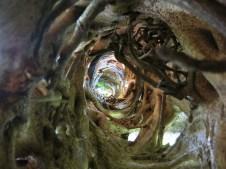 Der abgestorbene Baum hat hier einen Tunnel hinterlassen ...