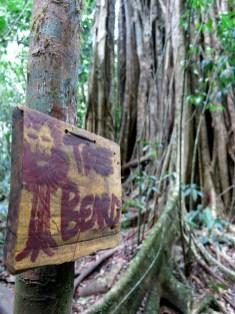 Hier versteckt sich unser zweites Rätsel, im bärtigen Baum