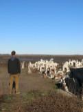 epecuen_cemetery_04