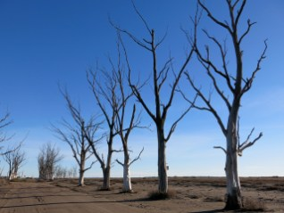 epecuen_way_03