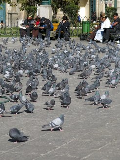 Nein, die Stadt hat kein Problem mit Tauben.