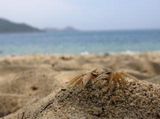 Mister Crabs