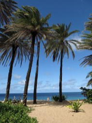 hawaii_beach_04