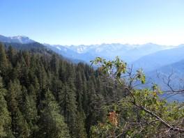 sequoia_02_02