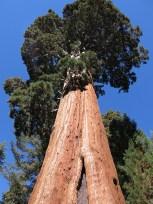 sequoia_02_09