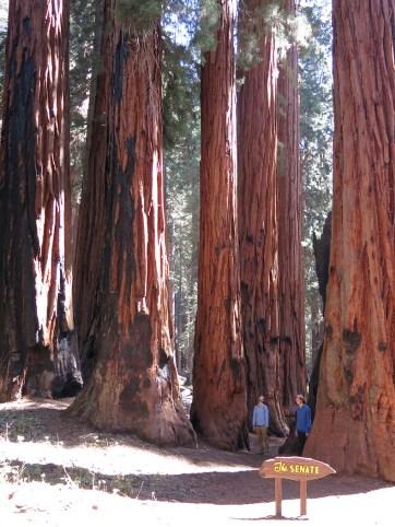 sequoia_02_16
