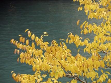 Wie schön der Herbst doch ist ...