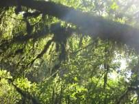 Das dichte grüne Blätterdach auf unserem Weg zu den Wasserfällen