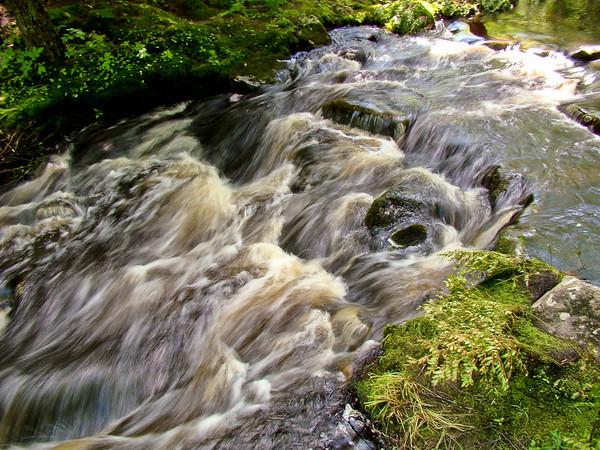 The Rush (Batson River, Emmons Preserve)