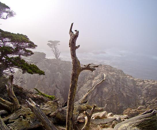 Point Lobos Fog