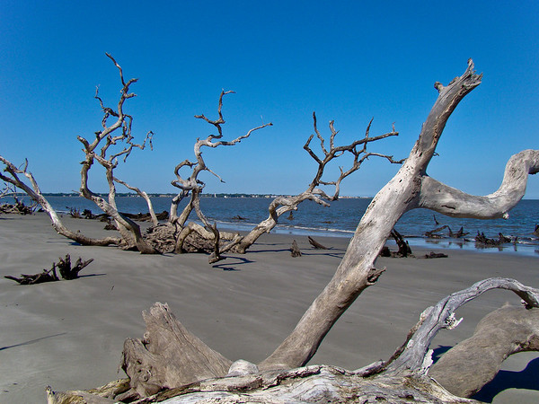 Jekyll Island Driftwood and St. Simons Light