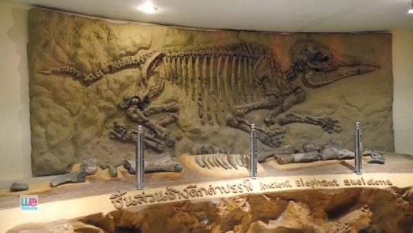 ชิ้นส่วนช้างดึกดำบรรพ์