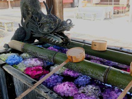 YokokujiHydragea02