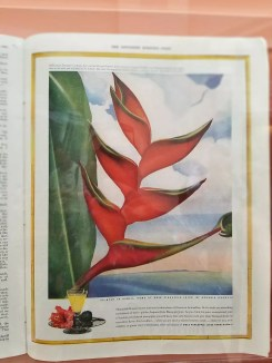 The Heleconia, Crab Claw Ginger by O'Keeffe which actually depicts a Heliconia Lobster Claw