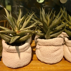 CB2 fake aloe plants as displayed in the store.
