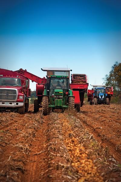 PEI Potato Harvest