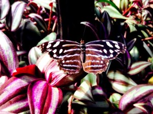 Butterfly House at the Prince Edward Island Preserve Company, New Glasgow, PEI