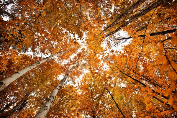 Fall Colours in Prince Edward Island