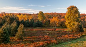 Fall forest in Strathgatney, Prince Edward Island