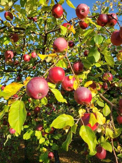 Photo by Wintermoor Orchard