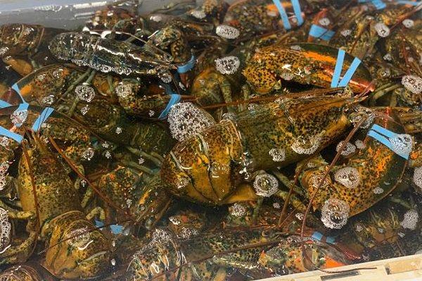TMG Lobster Shop