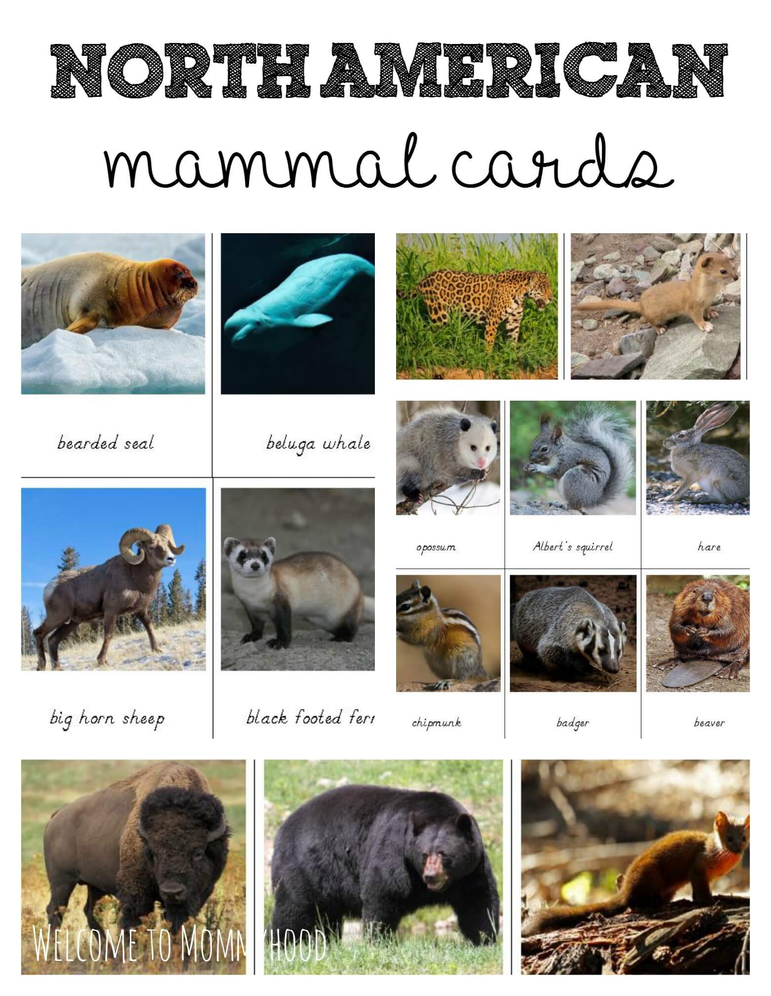 North American Mammals Cards For Montessori Activities