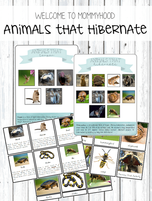 Montessori inspired hibernation printables and 3 part cards