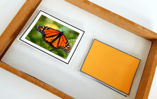 colors of butterflies cards for the perfect butterfly unit study